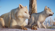 Planet Zoo Arctic Wolf