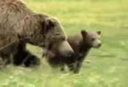 Zoboomafoo Grizzly Bears