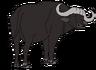 Benson the African Cape Buffalo