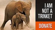 Elephant donate 1 481117
