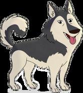 Suki the Dog