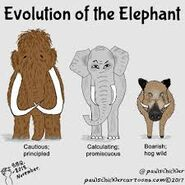 The Elephant Evolutions