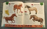 Horse Dictionary (10)