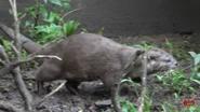 Memphis Zoo Otter (V2)