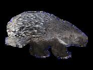 PorcupineEuropean HENDRIX