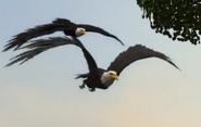 Superbook Eagles