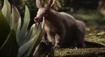 TLK 2019 Aardvark
