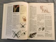 The Kingfisher Illustrated Encyclopedia of Animals (8)