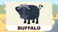 BluePhant Buffalo