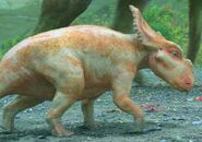 Tiffany The Pachyrhinosaurus