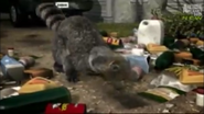 UTAUC Raccoon
