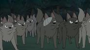 WBB Wolves