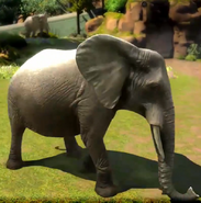 African-forest-elephant-zootycoon3