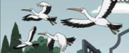 American Dad Stork
