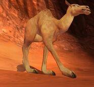 Camel IC