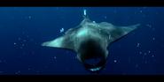 Oceans 2010 Manta