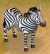 Zebra Safari Adventures