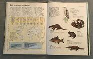 Macmillan Animal Encyclopedia for Children (32)