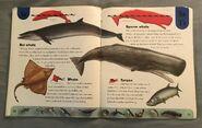 Ocean Life Dictionary (22)