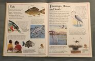 The Kingfisher First Animal Encyclopedia (27)