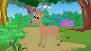 Appu Antelope