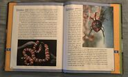 Scholastic Encyclopedia Of Animals (50)