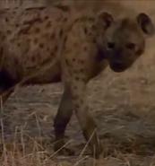 MATG Hyena