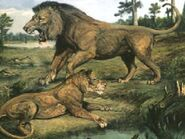 American lion and lioness