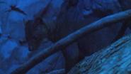 Cincinnati Zoo Fossa