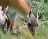 Mama Mirabelle's Home Movies Guanacos