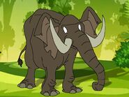 Rileys Adventures African Forest Elephant