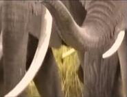 Zoboomafoo Hollywoodedge Elephant Trumpeting PE024801
