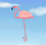 Flamingo standing on cloaked tortuga