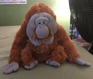 Ord the Orangutan