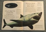 Sea Creatures (Over 100 Questions and Answers to Things You Want to Know) (11)