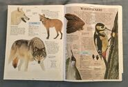DK Encyclopedia Of Animals (169)