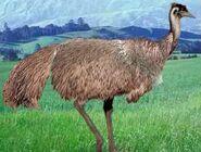 Emu switch zoo