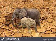 Global Warming Elephants
