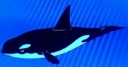 Batw 030 orca