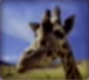 Giraffe-disneythinkfast