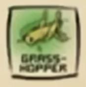 IMG df grasshopper