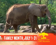 Pittsburgh Zoo Elephant (V2)