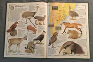 The Animal Atlas (10)