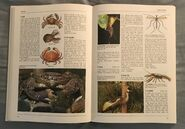 The Kingfisher Illustrated Encyclopedia of Animals (42)