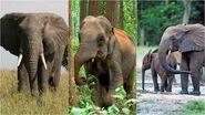 The Three Types of Elephants