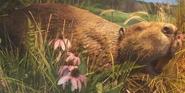 Toledo Zoo Beaver