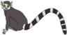 Larry the Ring-Tailed Lemur