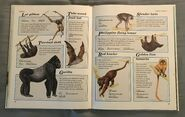 Macmillan Animal Encyclopedia for Children (24)