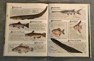 Macmillan Animal Encyclopedia for Children (37)