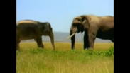 Natural Selection Makes Each Elephant the Right Size